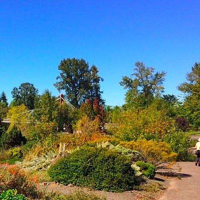 Alpine garden in Alton Baker Park (DeFazio Footbridge in the distance)