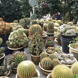 Can u see how big is the cactus?