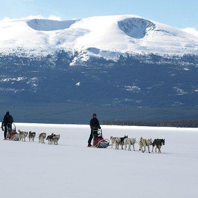 Yukon dog-sledding trips