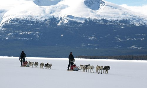 Yukon dog-sledding trips