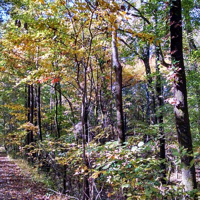 Fall on the Trails