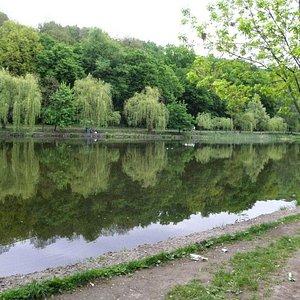 Нижний пруд в Голосеевском парке