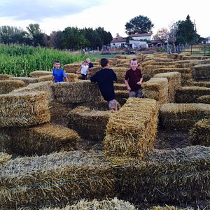 Fun Day at Swore Farms