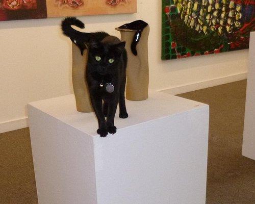 Phoenix, the museum cat