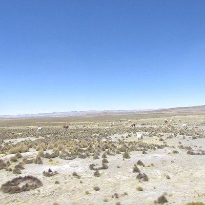 Reserva Salinas Arequipa