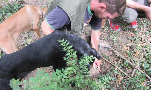 Truffle Hunting demo with Nikola