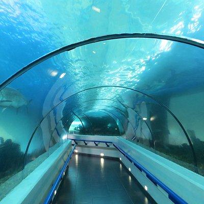 аквариум 7