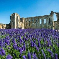 Les vestiges de la cathédrale de l'abbaye de Maillezais - CG85