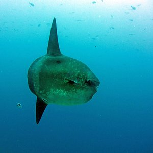 Mola Mola à Gili