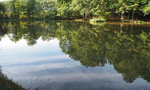 Pinch Pond