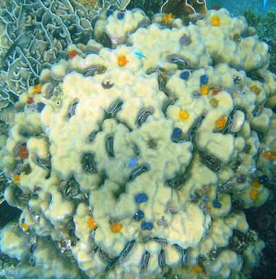 Coral and clams great sight
