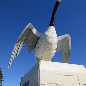 Canada Goose, Rusted underside