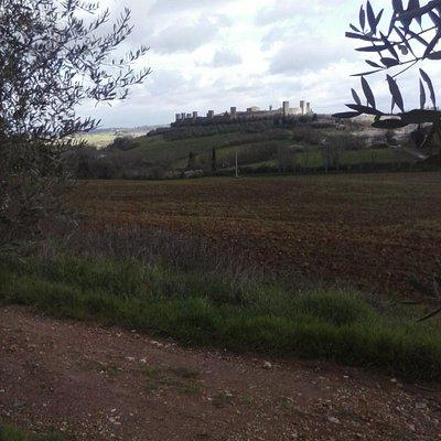 colline di Monteriggioni