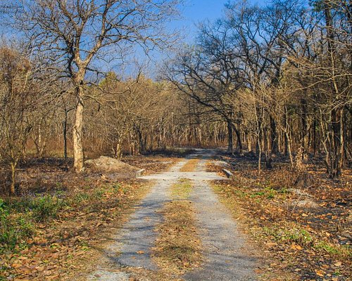 Mahananda Wildlife Sanctuary One of the Entrance Points - Not open to Public