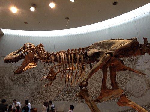 豊橋市自然史博物館 恐竜骨格