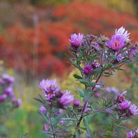 Fall flowers at the Owen Conservancy