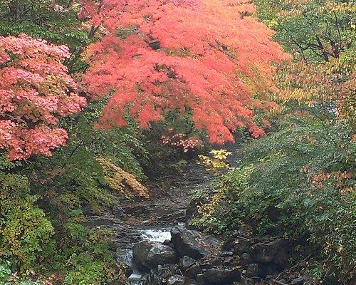 四季折々美しい。10月中旬は、紅葉真っ盛り。ありね温泉への道は紅葉のトンネル。特に橋の上からの紅葉は一押しです。