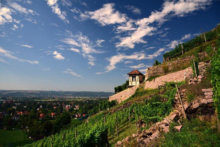 Tag des offenen Weingutes Radebeul 2015