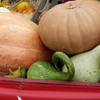 Pumpkins and Squash at Kula Country Farms Pumpkin Patch, Kula Maui Hawaii, James Brennan Hawaii