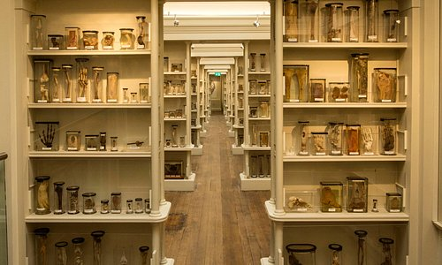 The Upper Gallery in the Wohl Pathology Museum