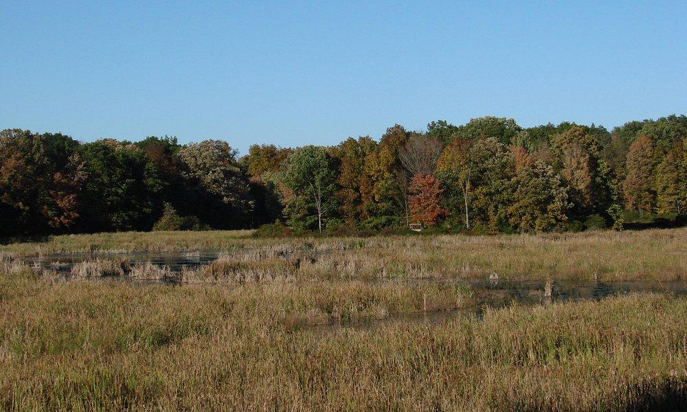 A view at the Jamestown Audubon Sanctuary