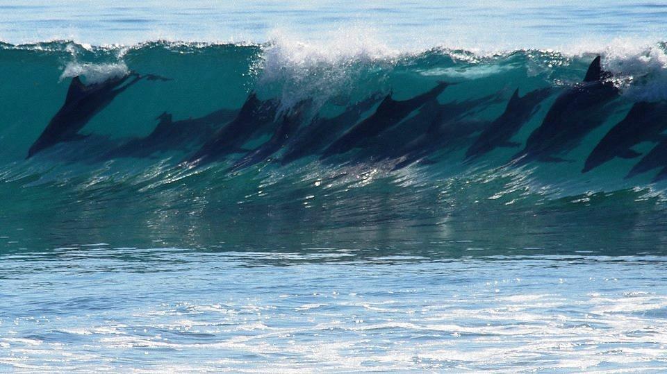Watching the locals surf