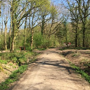 Burbage Common and Woods