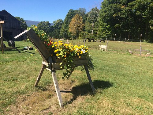 Flower horse at Dutton's