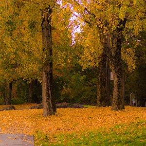 Fall leaves in Wintler Park