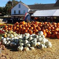 Pumpkin piles at Lull Farm