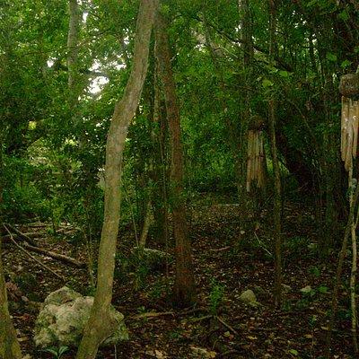Tree Garden Nature Trail