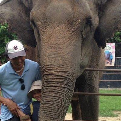 Ellie the Elephant at Wanpi World Safari Zoo