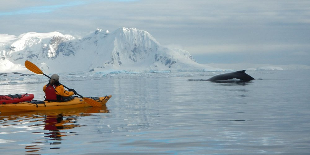 Humpback whale at Cuverville Island