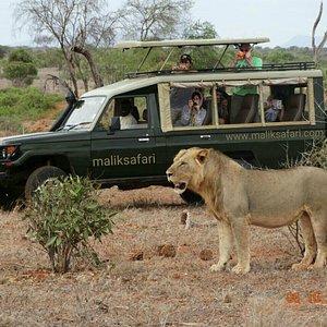 maliksafari