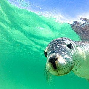 Sea Lion - Turquoise Safaris