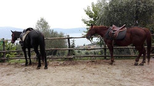 I Cavalli e la vista dal maneggio