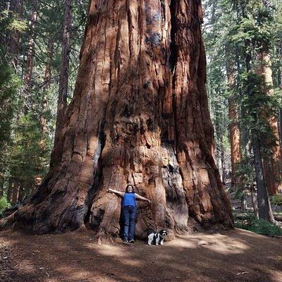 Sequoia Park Garden