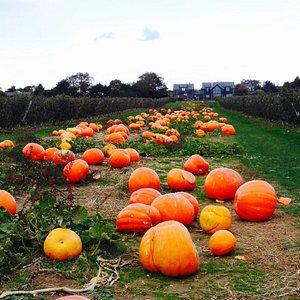 The little pumpkin patch
