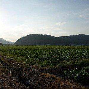 象鼻山の遠景