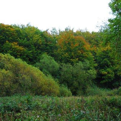 Autumn clours on the Barrow