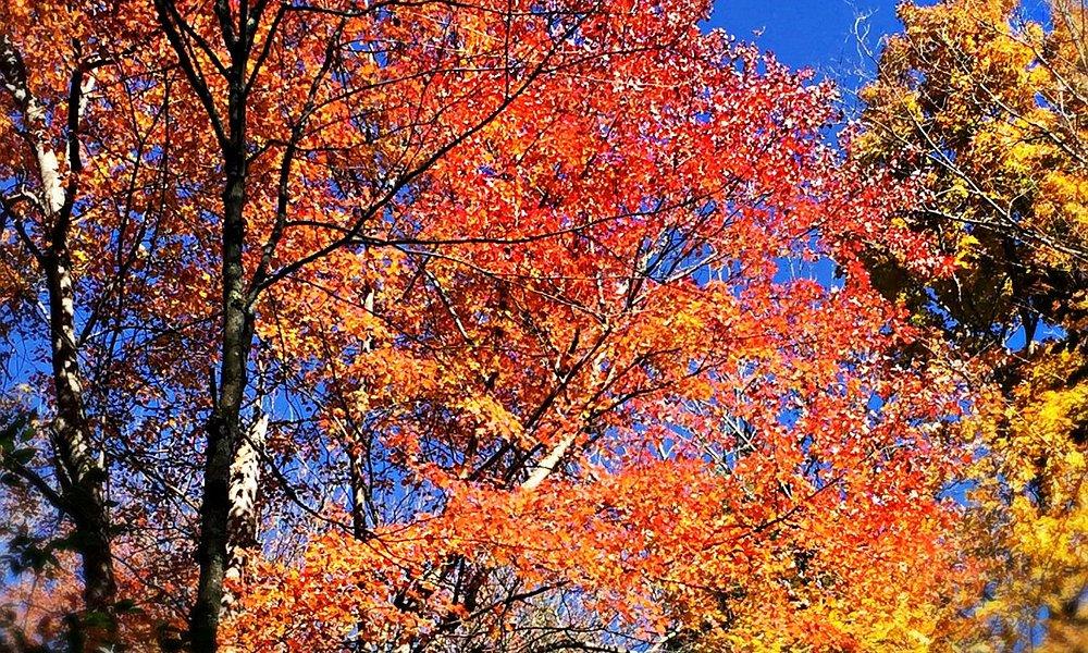 Fall on Ice Pond Loop 1015