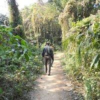 the walk through Chintamani Kar Bird Sanctuary