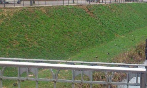 Утки у моста