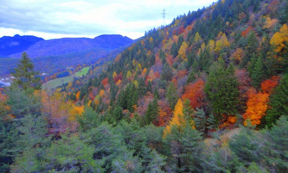 autunno visto dalla pineta di flavon