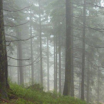 Schwarzwald bei Nebel