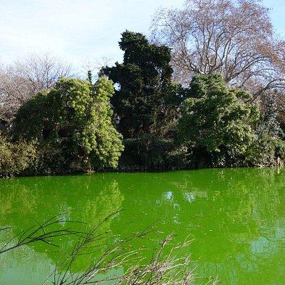 Зима, а все зеленое
