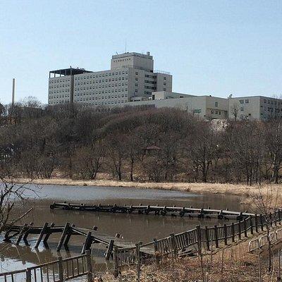 散策路から市立病院の丘を見上げる