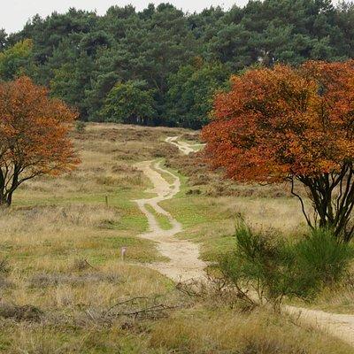 Herfst op Tafelbergheide (1)