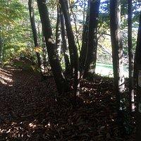 Promenade escarpée sous les bois bucolique