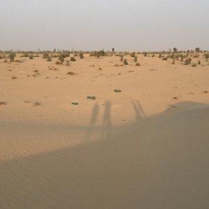 Al Qudra Lake